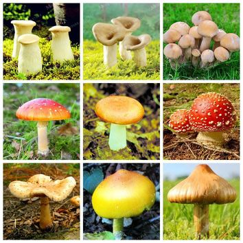 100 Pcs / Bag Various Mixed Edible Health Mushrooms Vegetable Seeds  Funny Succlent Plant  Happy Farm Seed Easy To Grow