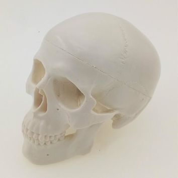Mini Skull Human Anatomical Anatomy Head Medical Model Convenient Painting Model Studying Anatomy Teaching Supplies