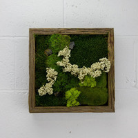 "New York - Water free green wall art, moss and preserved plants - Vertical garden, green wall decor - 12""x 12"" Rustic Frame"