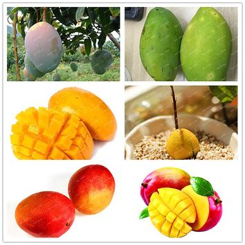 New 3pcs/bag Mango seeds Chinese Bonsai tree seeds Delicious Organic heirloom fruit seeds potted plant for home garden seeds