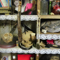 Curiosity Cabinet No3 Example Assemblage of curiosities