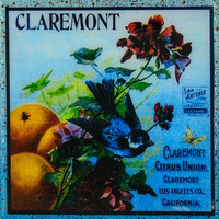 Claremont Blue Bird - Vintage Citrus Crate Label - Handmade Recycled Tile Coaster