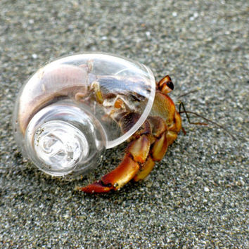 Handblown glass shell for hermit crab. Live crab not included.