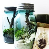 Large Vintage Ball Mason Jar Terrarium by doodlebirdie on Etsy