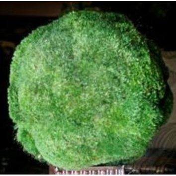Forever Green Art Preserved Moss Balls