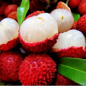 10 Organic Sweet Lychee Juicy Lychy Litchi Seeds, Leechee Fruit Tree Tropical Fruit  Seeds For Home Garden Backyard Big Size