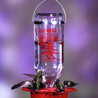 Hummingbird Feeders - HUMMINGBIRD FEEDER-32 OZ