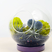 Table Terrarium with ceramic ring - Echinops - Air Plant - Holiday Home Decoration - Green Gift