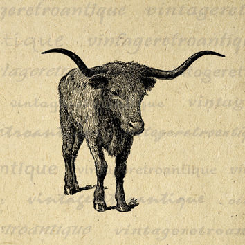 Texas Longhorn Bull Printable Graphic Download Steer Digital Cow Image Vintage Clip Art for Transfers etc HQ 300dpi No.3158