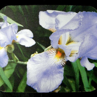 "OFFICE DESK Decor - Purple Iris Mouse Pad measuring a generous 7.75"" x 9.25"""