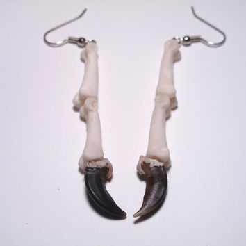 Coyote Claws and Phalanges Bone Earrings. Real animal bone jewelry