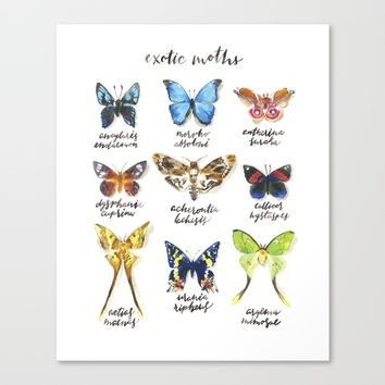 Exotic Moths Canvas Print by Andrea Fairservice