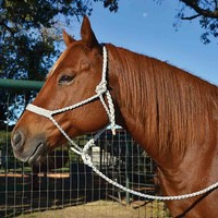 Teskey's Saddle Shop: Martin Mule Tape Halter