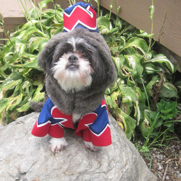 Flying Monkey from Wizard of Oz Dog Costume