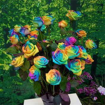 200pcs Holland Rainbow Rose seeds rare colorful Flower Seeds festival gift bonsai plant for home garden supplies Free Shipping