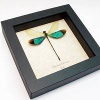 Valentine's Day Gift Real Emerald Green Dragonfly Damselfly Display 7797