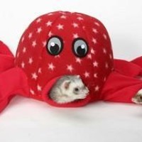 Marshall Ferret Octo Play Toy