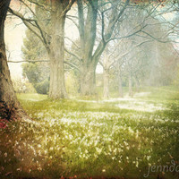 Go With Grace - fine art photograph, nature photography, tree photography, spring green, surreal landscape, nursery decor, fairy tale