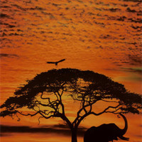 African Skies Prints - AllPosters.co.uk