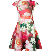 ROZIEY - Rose on canvas print dress - Bright Pink | Womens | Ted Baker UK