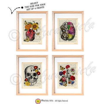 Anatomical set of 4 dictionary art prints-anatomy wall art-anatomy on book page-brain print-heart print-skull print-lungs print-NATURA PICTA