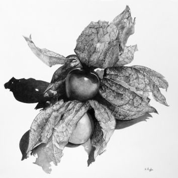 Physalis original charcoal drawing fruit by ggsarts on Etsy