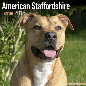 American Staffordshire Terrier Calendar - Brees Specific American Staffordshire Terriers Calendar - 2015 Wall calendars - Dog Calendars - Monthly Wall Calendar by Avonside