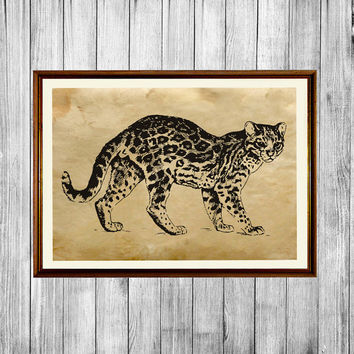 Ocelot poster Animal art print Cabin home decor AK416
