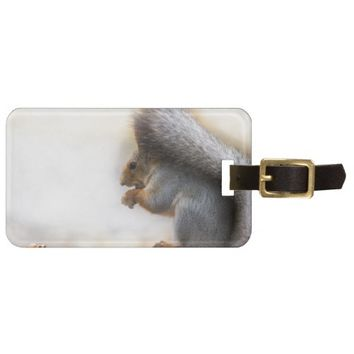 Squirrel on a bench and some nuts luggage tag