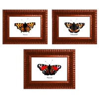 Butterfly Art Prints, Set of Three, 7x5 inch Prints, Archival Watercolour Paper, Nature Art Study, British Butterflies