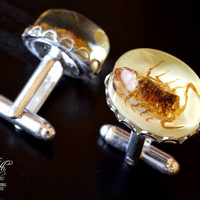 Wedding Cufflinks with real Scorpions inside - Taxidermy Insect .