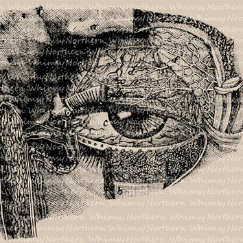 Vintage Clip Art Image – Vintage Anatomy Eyeball – creepy image from 1875 book – Printable Graphic – instant download - CU OK img 2008