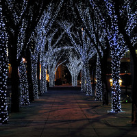 beautiful christmas lights - Google Search