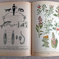 Vintage biology textbook Old medical book Medicine tutorial education Future doctor Old healthcare Darwin's evolution Metabolism Genetics