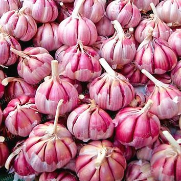 100 Pcs Garlic Seeds Red And Healthy Bonsai Seeds Diy Plant Rare Onion Garlics Vegetable Seeds Very Easy Grow For Home Garden