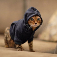 Casual Canine Basic Hoodie - Navy