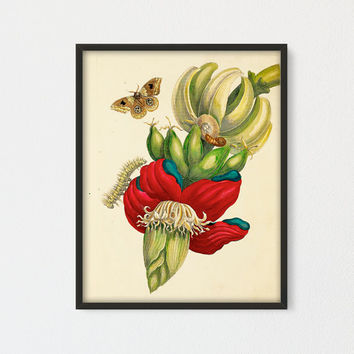 BANANA FLOWER Printable, Botanical Vintage Art Print, Large Banana Plant with Fruit Butterfly and Caterpillar, Butterfly Natural History Art