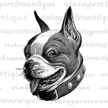 Dog Digital Image Printable Boston Terrier Art Animal Clipart Antique Dog Graphic Cute Pet Art Vintage Clip Art Jpg Png Eps HQ 300dpi No.193