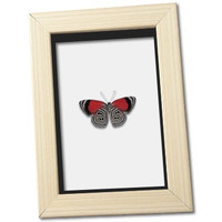 Real 88 Butterfly Framed Display
