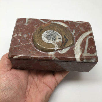 "614g, 5""x3""x2"" Rectangular Fossils Ammonite Red Jewelry Box @Morocco, MF662"