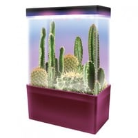 Cactus Garden LED Light Cube-ScientificsOnline.com