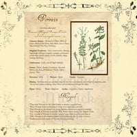 MAGICK HERB VERVAIN, Digital Download,  Book of Shadows Page, Grimoire, Scrapbook, Spells, White Magick, Wicca, Witchcraft, Herb Magic