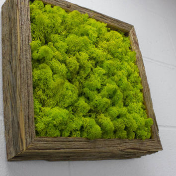"Green Moss Frame - Water free green wall art, moss and preserved plants - Vertical garden, moss wall decor -  12""x 12"" Rustic Frame"