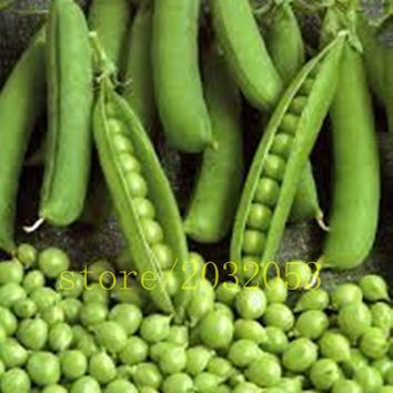 20 bean seeds Green Pea Alpha Russian Organic Heirloom Vegetable seeds for home garden planting