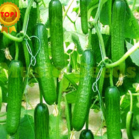 1BAG=200pcs hot sale CUCUMBER seeds CHINESE MINI NO-GMO vegetable seeds delicious bonsai home & garden strawberry seeds for gift