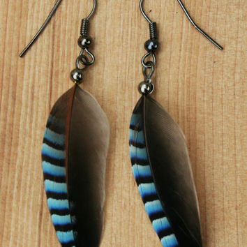 Blue Jay bird feather striped unusual earrings