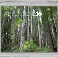 Adventure Inspirational Quote Photo, California Redwoods Photography Nature Photograph, green, Typorgraphy Print, Photo quote print