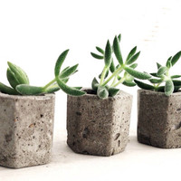 Miniature Urban Industrial Cement Planters, Wedding Favors, Hexagon, Angular Concrete Planter, Succulents, Geometric, Modern