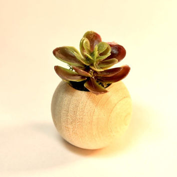 Miniature Succulent Artificial Plant Fairy Garden Dollhouse Natural Wood Round Planter
