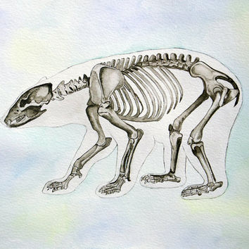 Bear, watercolor painting, bear skeleton, anatomy, animal art, art, painting, drawing, picture